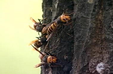 山の脅威スズメバチの猛襲!登山道は外れないように