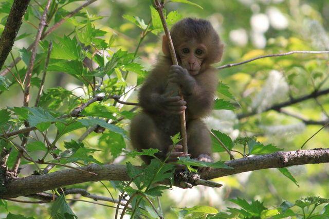 秋は野生動物との遭遇に注意!イノシシや猿とよく出くわす・・・