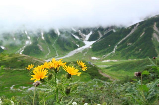 山にある「お花畑」ってなに?